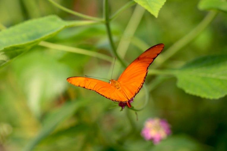 vlinder_balkon